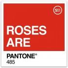 Roses are Pantone