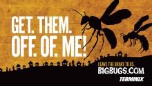 Big Bugs Case Study